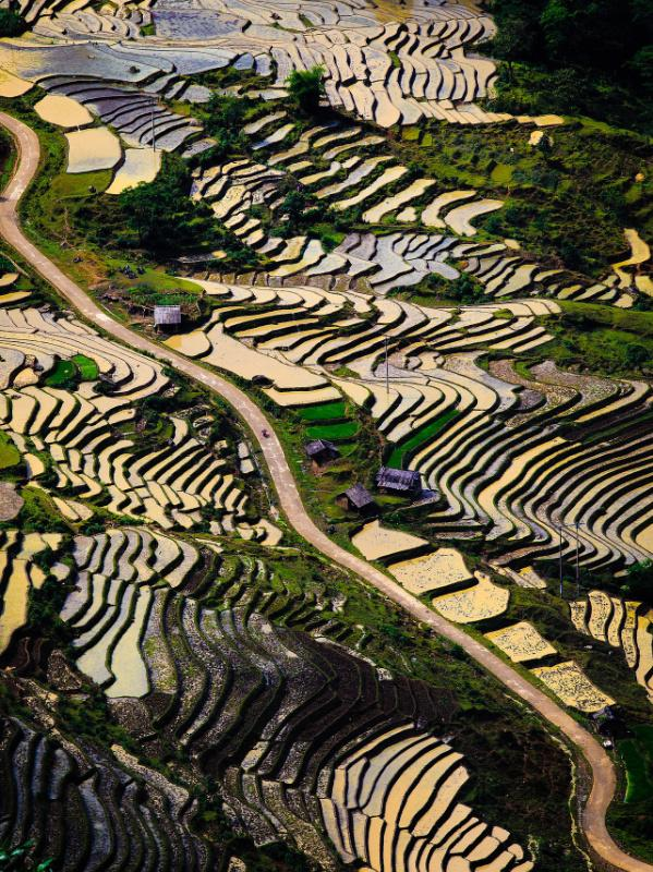 Risaie vietnamite patrimonio UNESCO