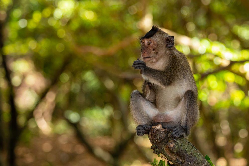 Nella giungla del parco nazionale di Con Dao ci sono tantissimi animali