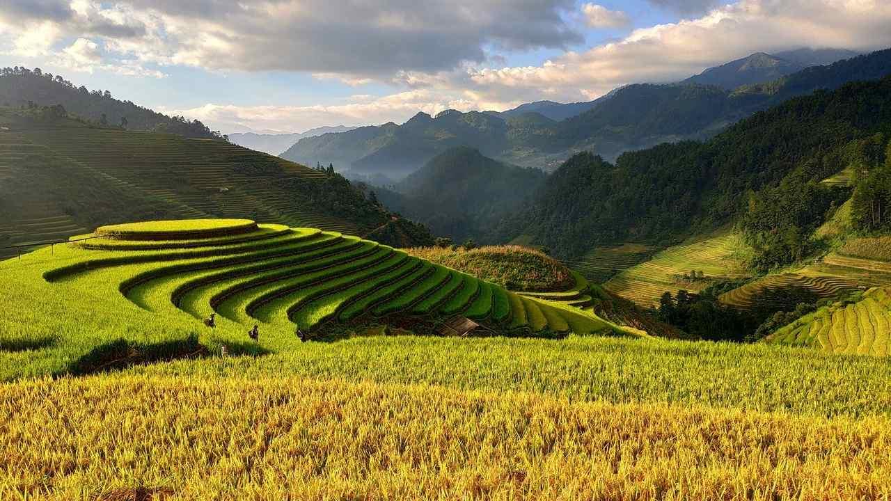 Le fantastiche risaie del Nord del Vietnam